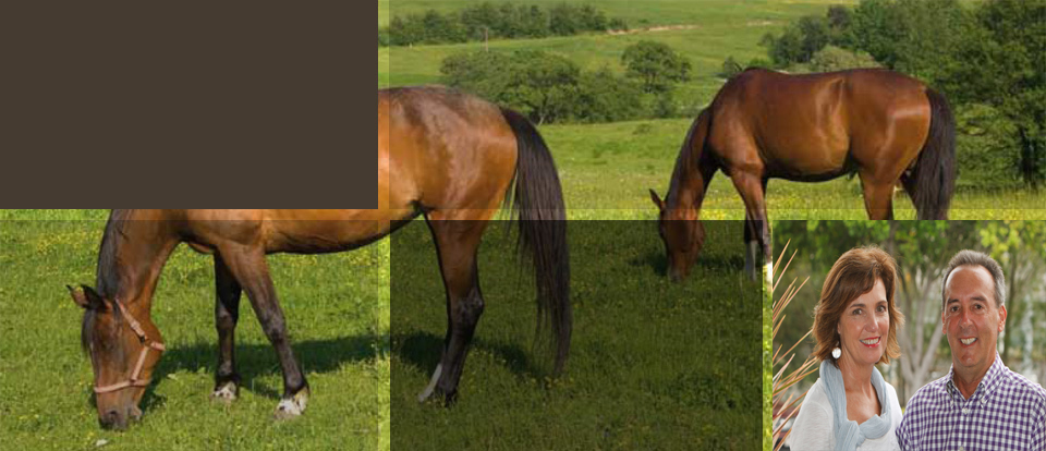 Horse Stud Locum - Manage your horse Stud